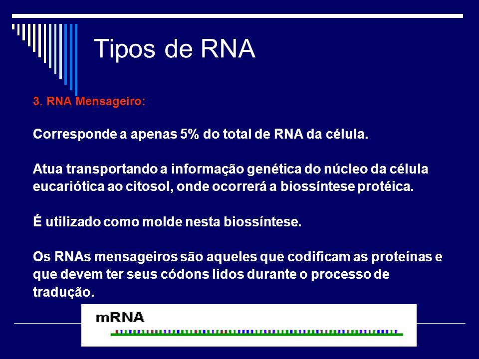 Tipos de RNA Corresponde a apenas 5% do total de RNA da célula.