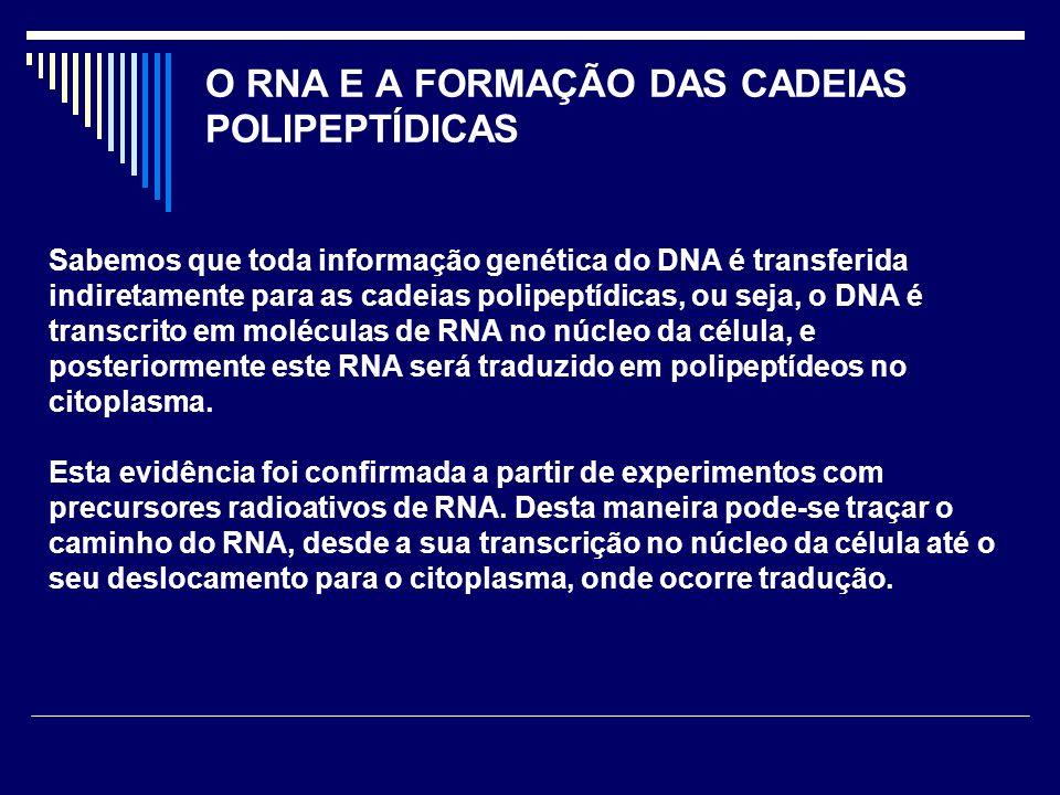 O RNA E A FORMAÇÃO DAS CADEIAS POLIPEPTÍDICAS
