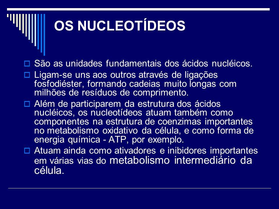 OS NUCLEOTÍDEOS São as unidades fundamentais dos ácidos nucléicos.