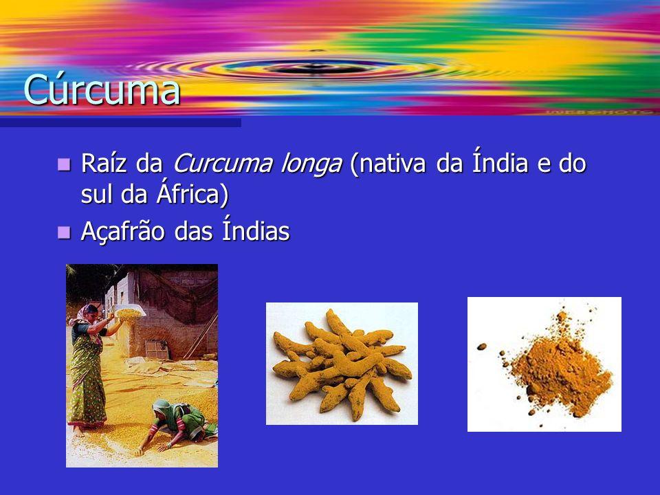 Cúrcuma Raíz da Curcuma longa (nativa da Índia e do sul da África)