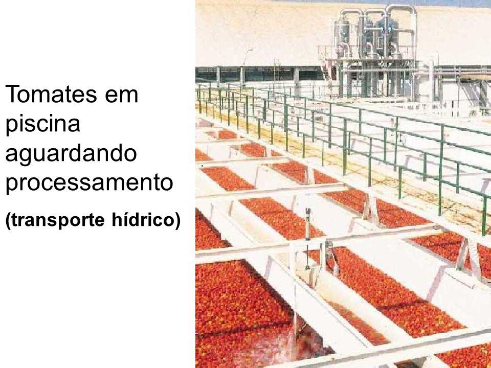 Tomates em piscina aguardando processamento