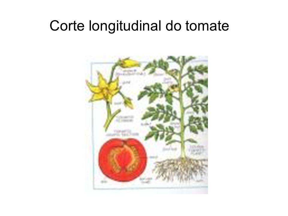 Corte longitudinal do tomate