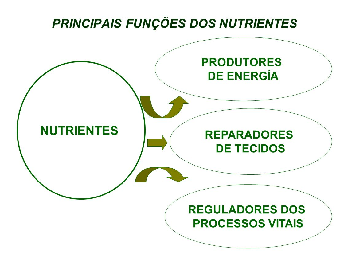 PRINCIPAIS FUNÇÕES DOS NUTRIENTES