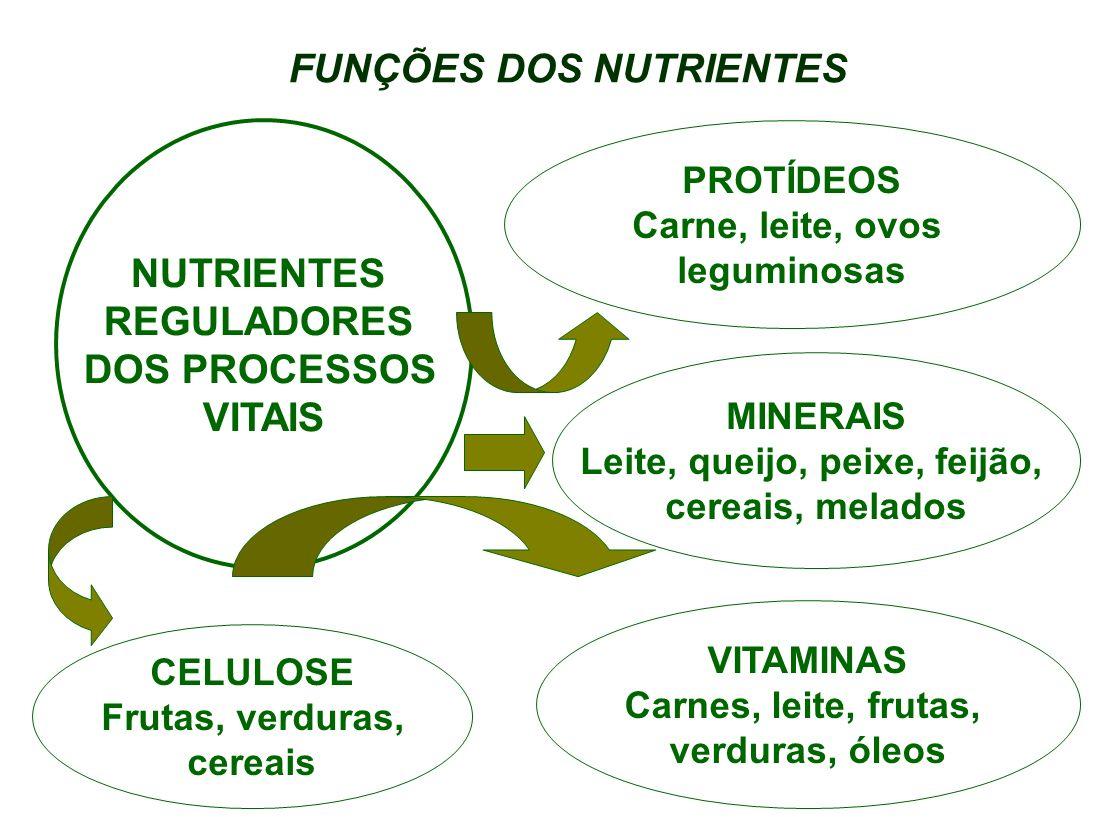 FUNÇÕES DOS NUTRIENTES Leite, queijo, peixe, feijão,