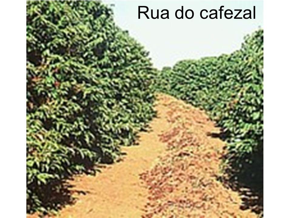 Rua do cafezal
