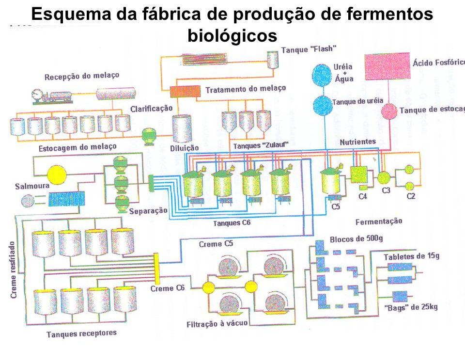 Esquema da fábrica de produção de fermentos biológicos