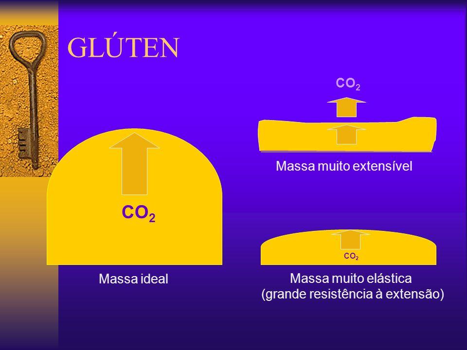GLÚTEN CO2 CO2 Massa muito extensível Massa ideal Massa muito elástica