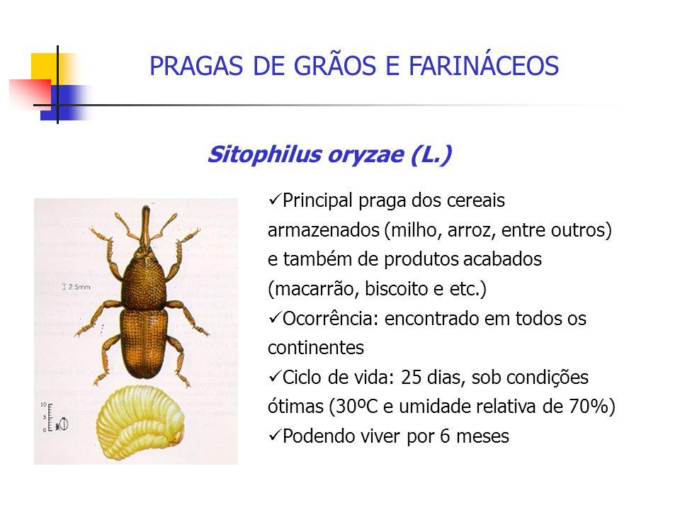 PRAGAS DE GRÃOS E FARINÁCEOS
