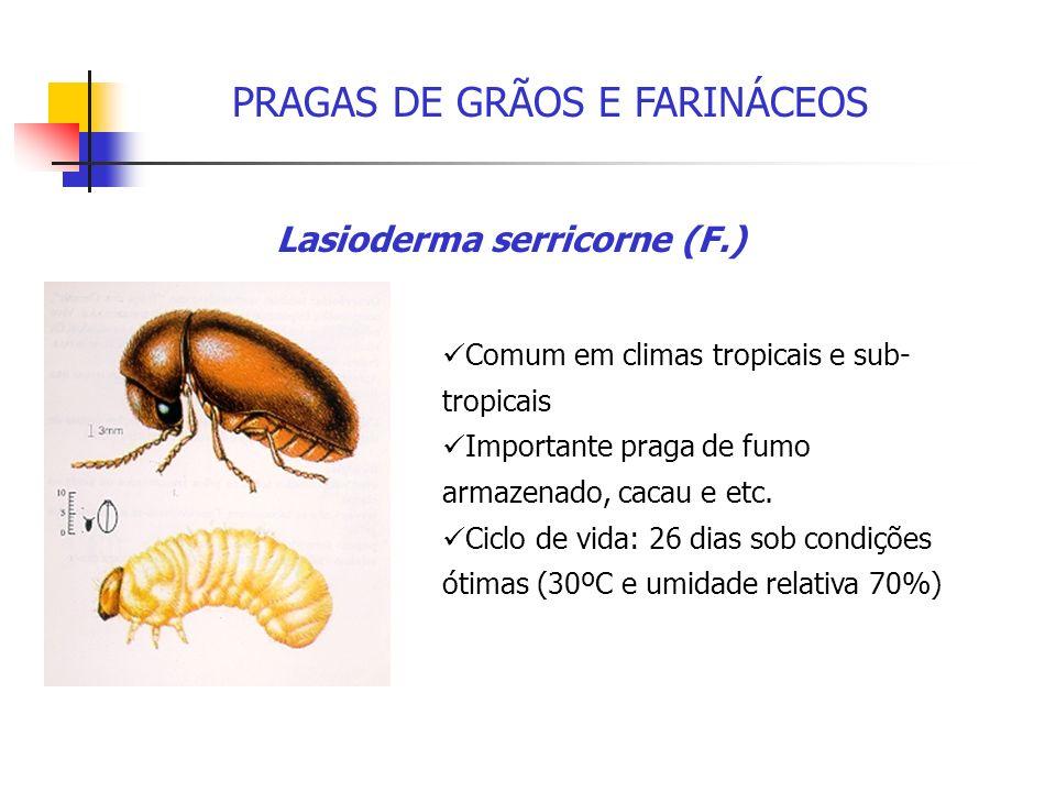 Lasioderma serricorne (F.)