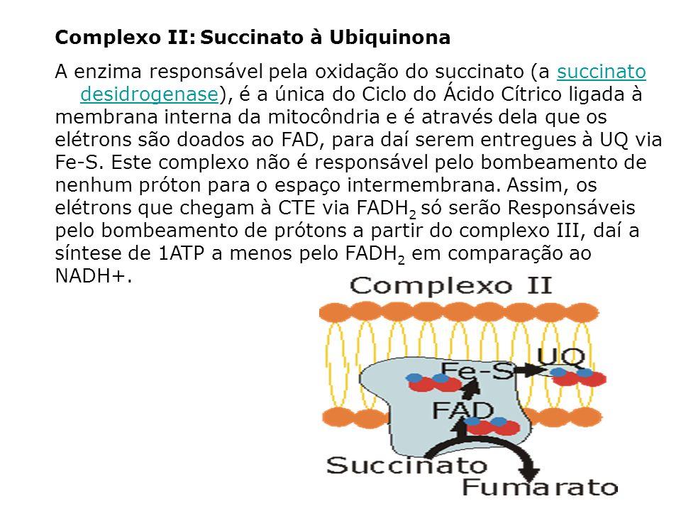 Complexo II: Succinato à Ubiquinona