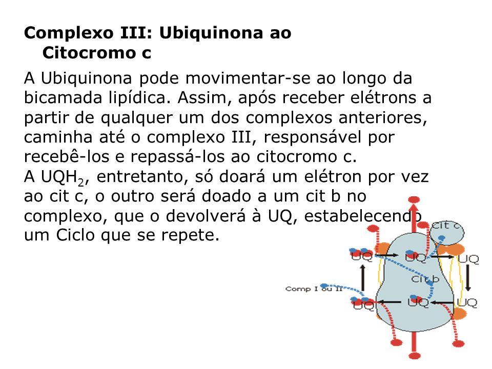 Complexo III: Ubiquinona ao Citocromo c