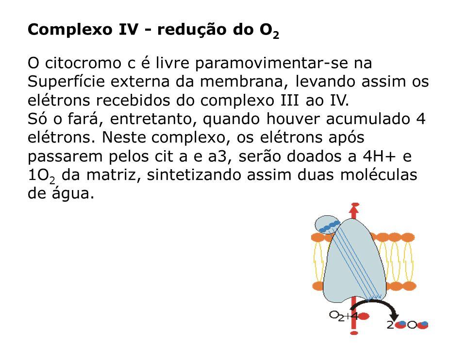 Complexo IV - redução do O2