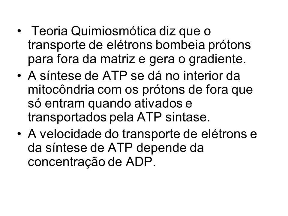 Teoria Quimiosmótica diz que o transporte de elétrons bombeia prótons para fora da matriz e gera o gradiente.