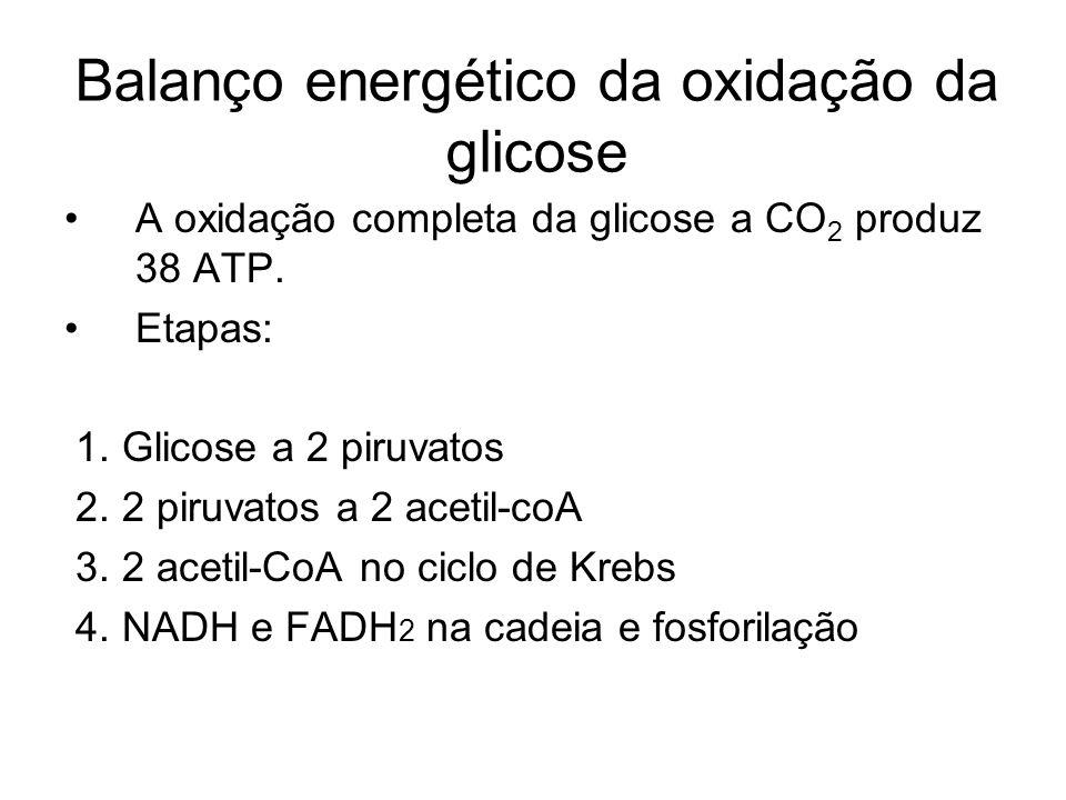 Balanço energético da oxidação da glicose
