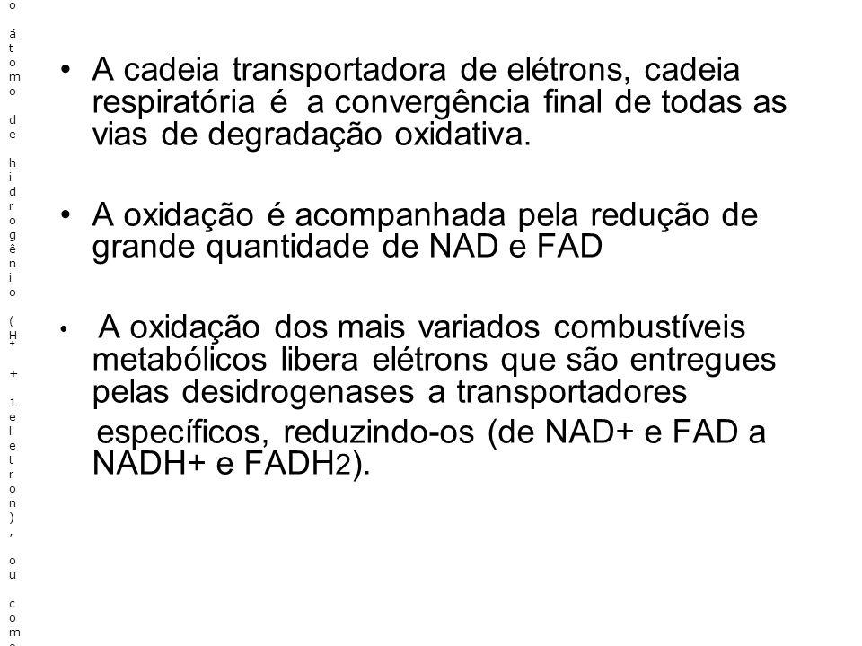 específicos, reduzindo-os (de NAD+ e FAD a NADH+ e FADH2).