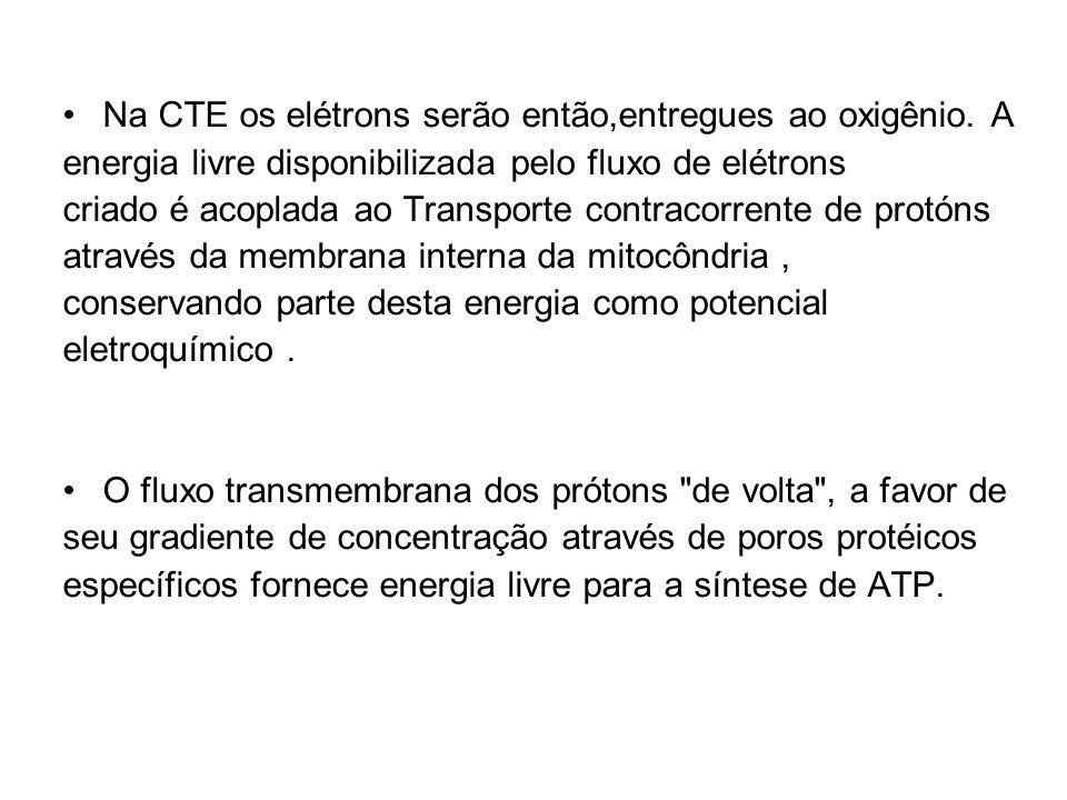 Na CTE os elétrons serão então,entregues ao oxigênio. A