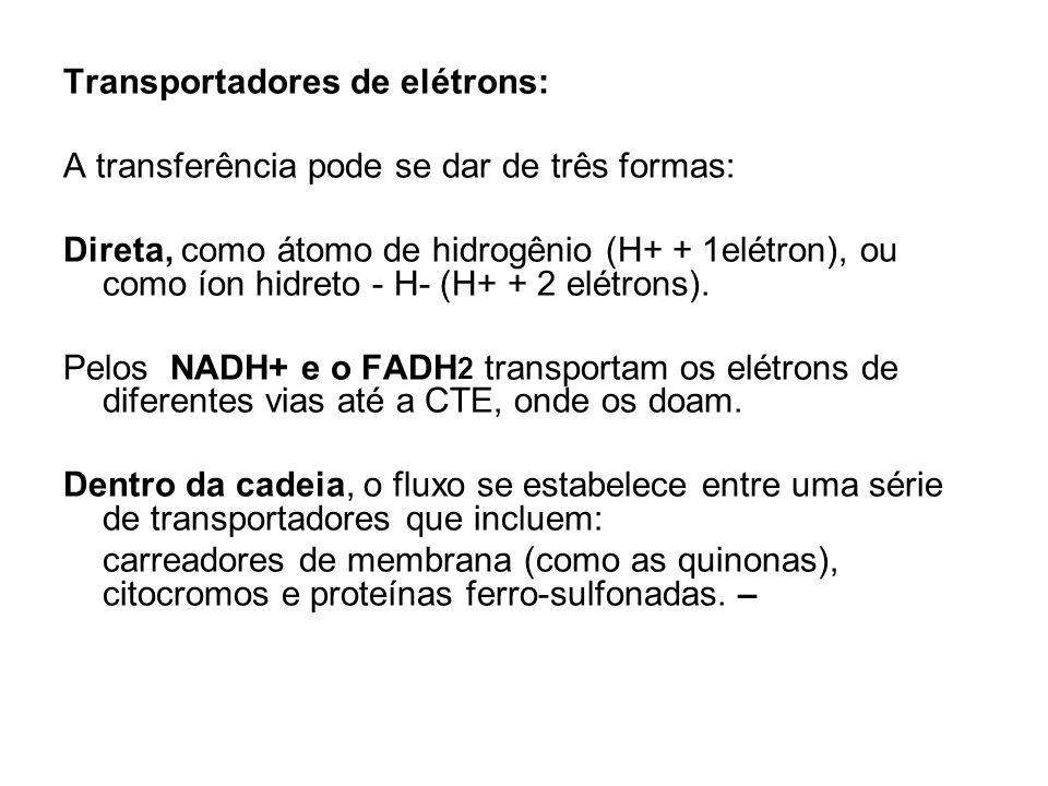 Transportadores de elétrons: