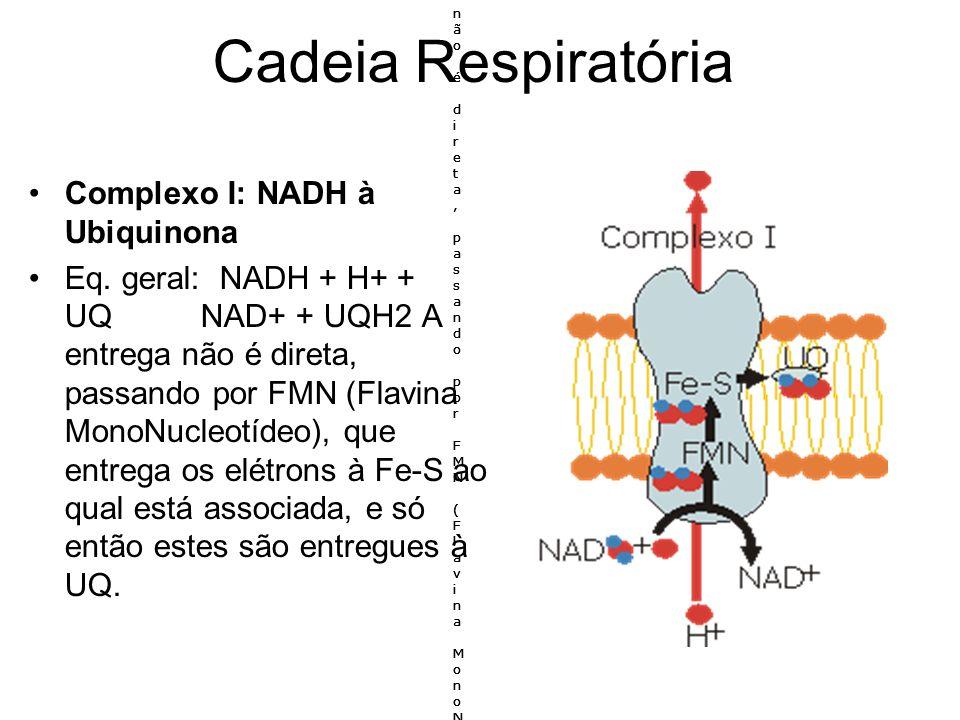 Cadeia Respiratória Complexo I: NADH à Ubiquinona