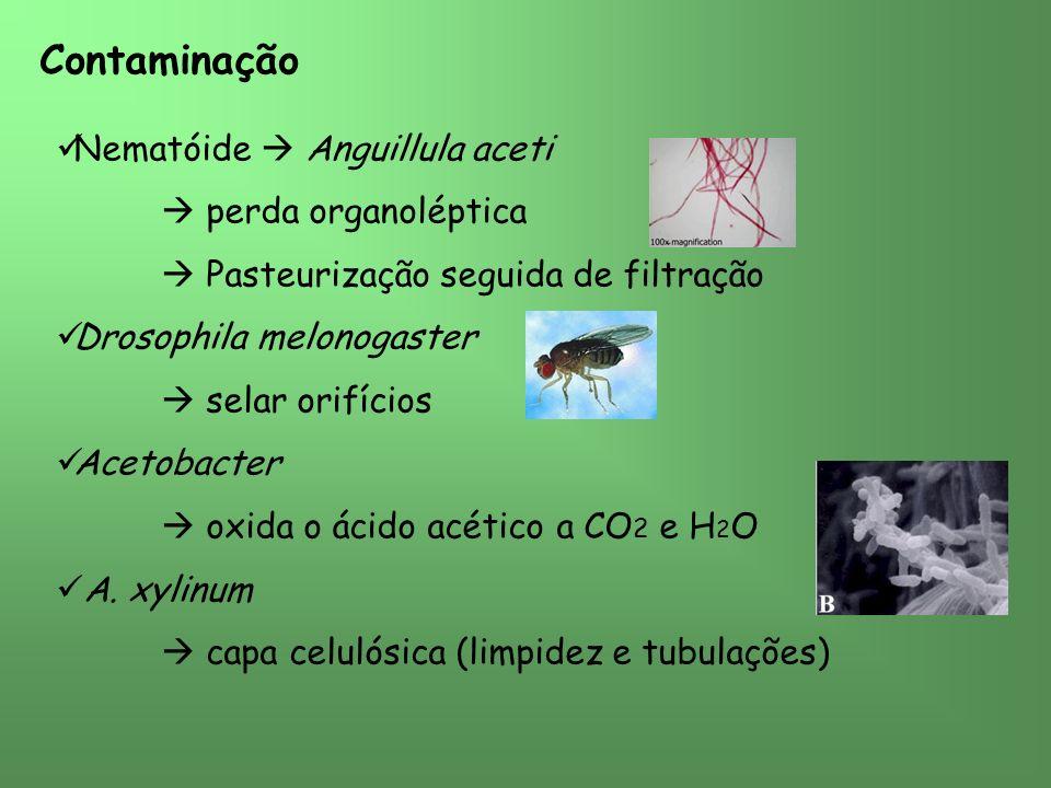 Contaminação Nematóide  Anguillula aceti  perda organoléptica