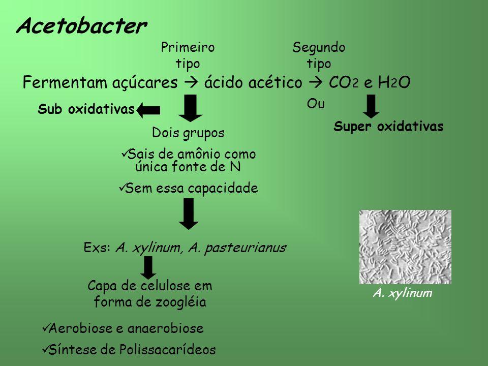 Acetobacter Fermentam açúcares  ácido acético  CO2 e H2O