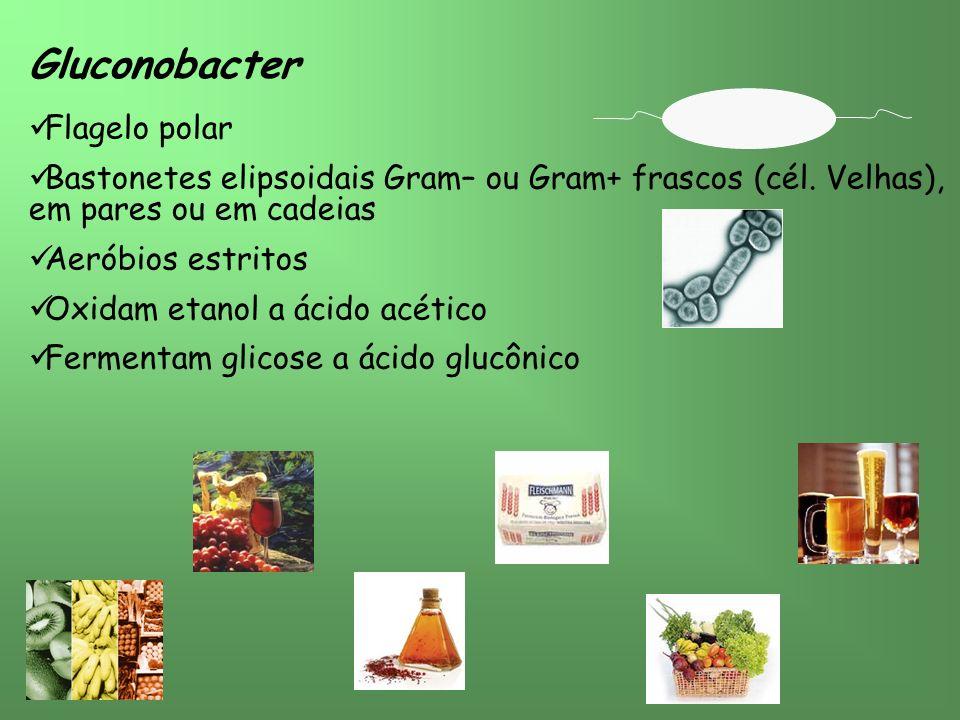 Gluconobacter Flagelo polar