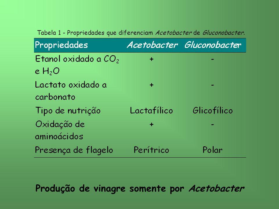 Produção de vinagre somente por Acetobacter