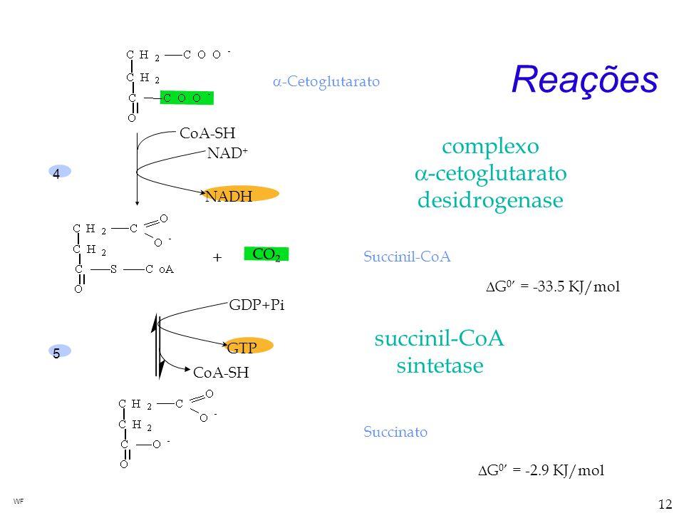 Reações complexo a-cetoglutarato desidrogenase succinil-CoA sintetase