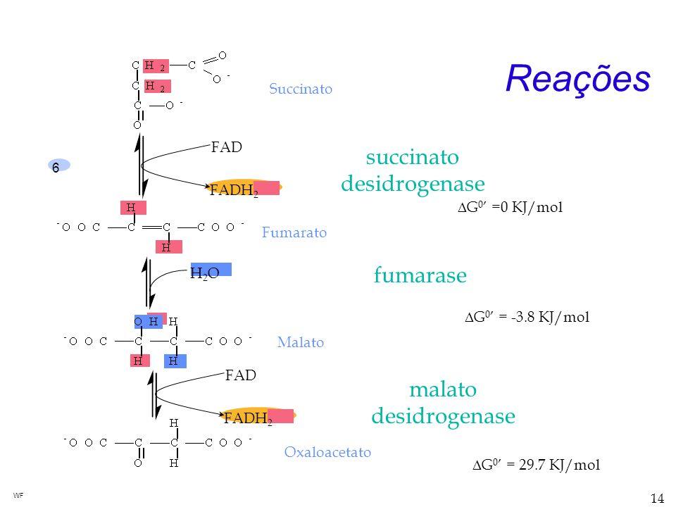 Reações succinato desidrogenase fumarase malato desidrogenase