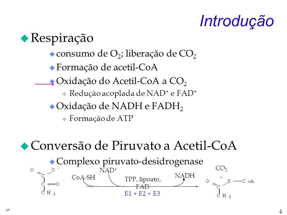 Introdução Respiração Conversão de Piruvato a Acetil-CoA