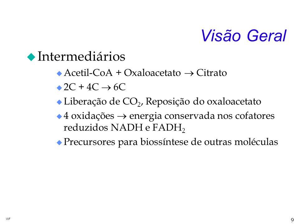 Visão Geral Intermediários Acetil-CoA + Oxaloacetato  Citrato