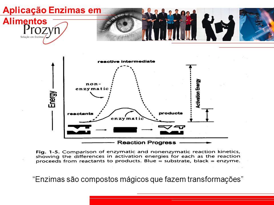 Enzimas são compostos mágicos que fazem transformações