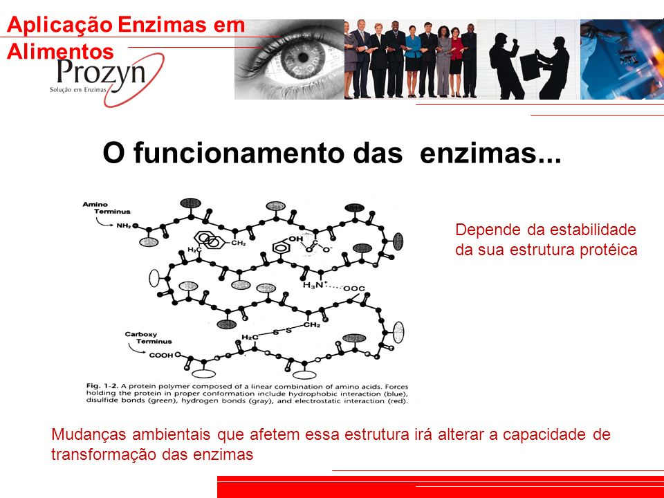 O funcionamento das enzimas...
