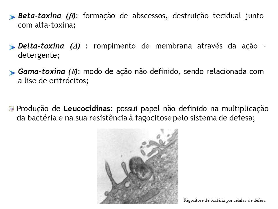 Delta-toxina () : rompimento de membrana através da ação -detergente;