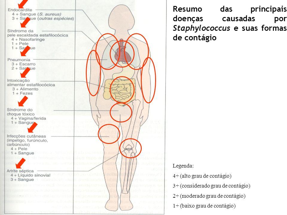 Resumo das principais doenças causadas por Staphylococcus e suas formas de contágio