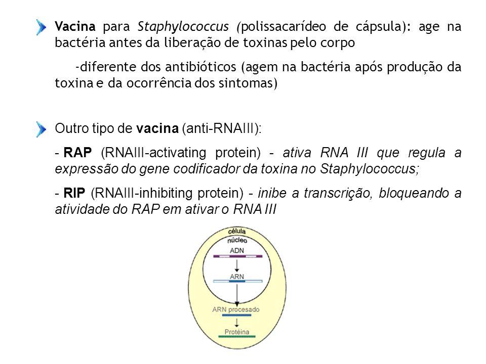 Vacina para Staphylococcus (polissacarídeo de cápsula): age na bactéria antes da liberação de toxinas pelo corpo