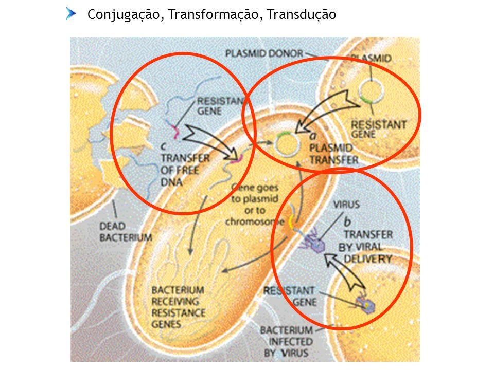 Conjugação, Transformação, Transdução