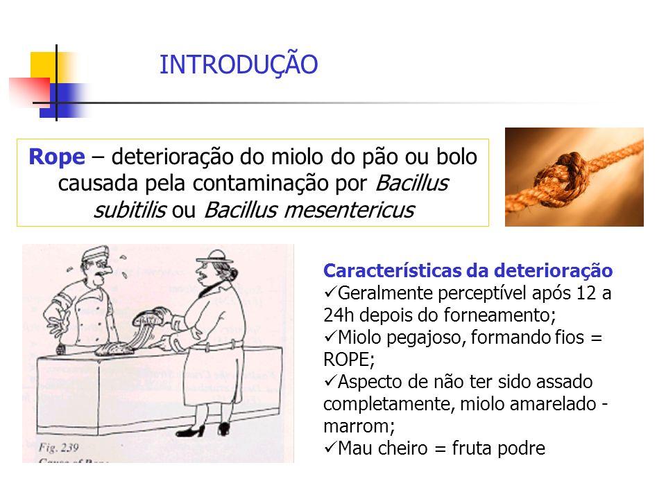 INTRODUÇÃO Rope – deterioração do miolo do pão ou bolo causada pela contaminação por Bacillus subitilis ou Bacillus mesentericus.