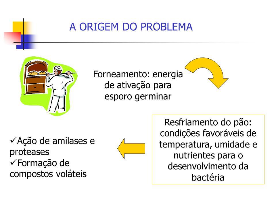 Forneamento: energia de ativação para esporo germinar