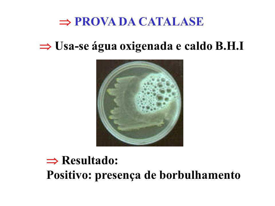  PROVA DA CATALASE Usa-se água oxigenada e caldo B.H.I.
