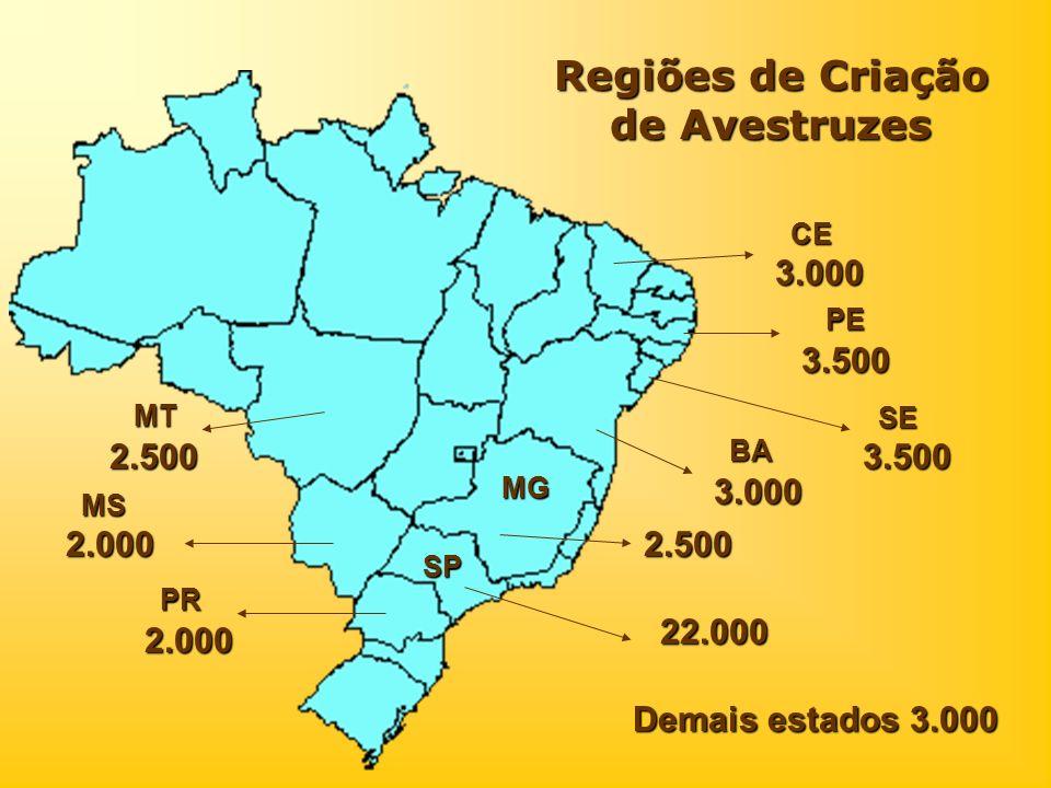 Regiões de Criação de Avestruzes