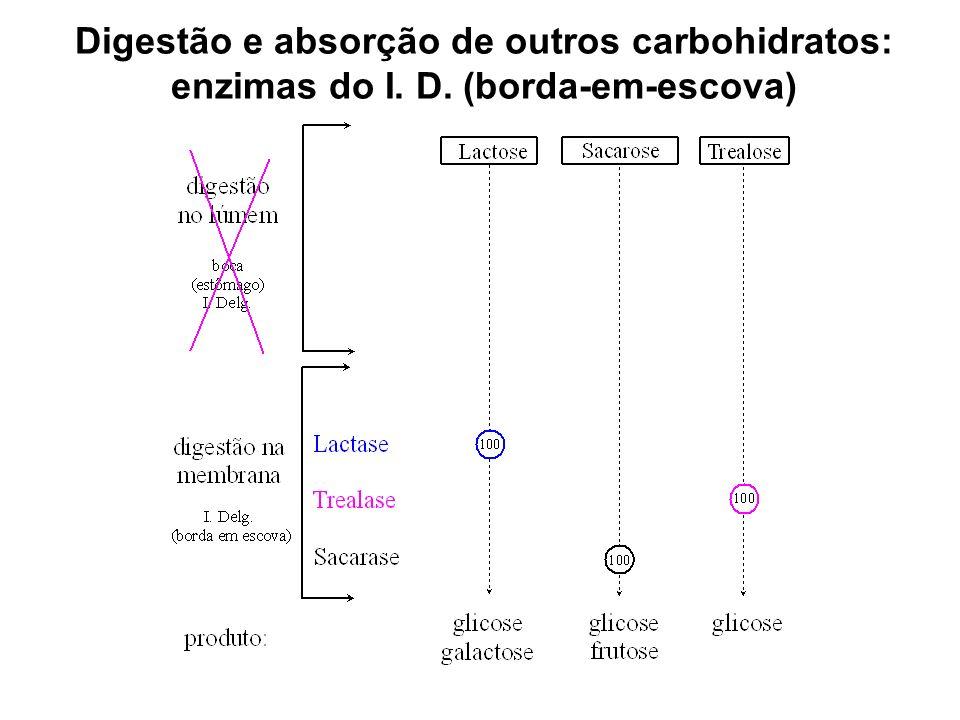 Digestão e absorção de outros carbohidratos: