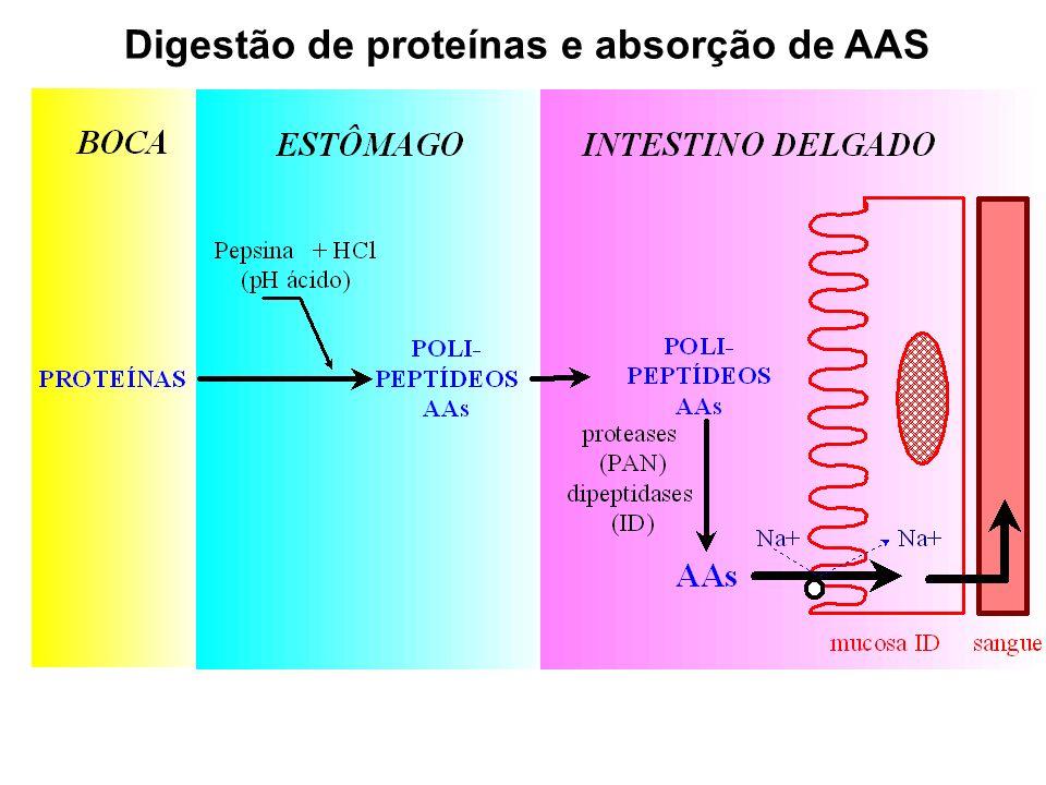 Digestão de proteínas e absorção de AAS