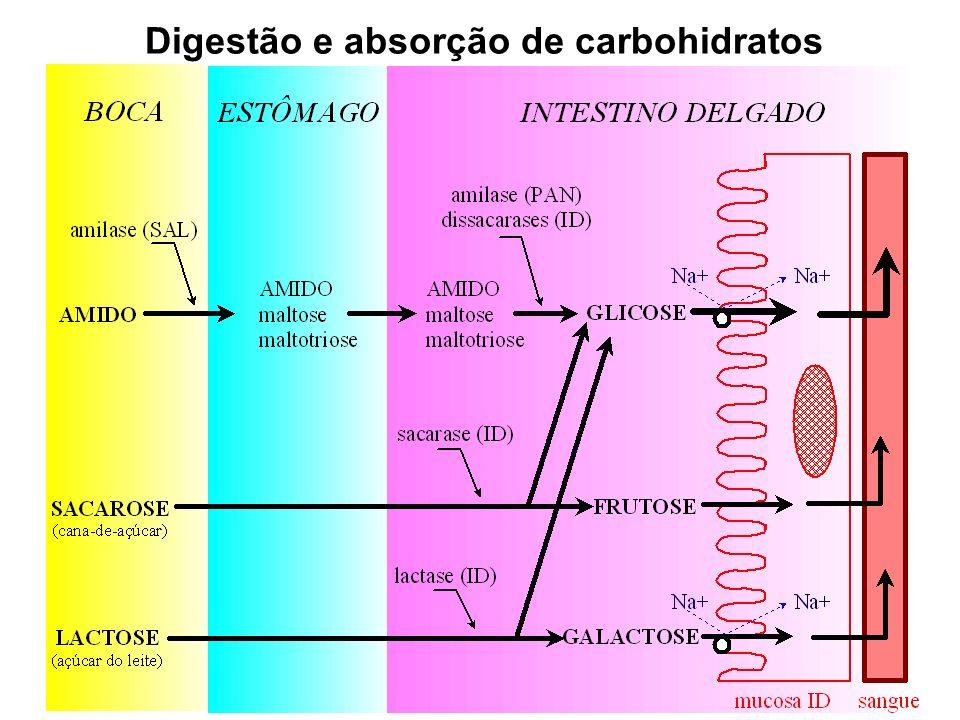 Digestão e absorção de carbohidratos