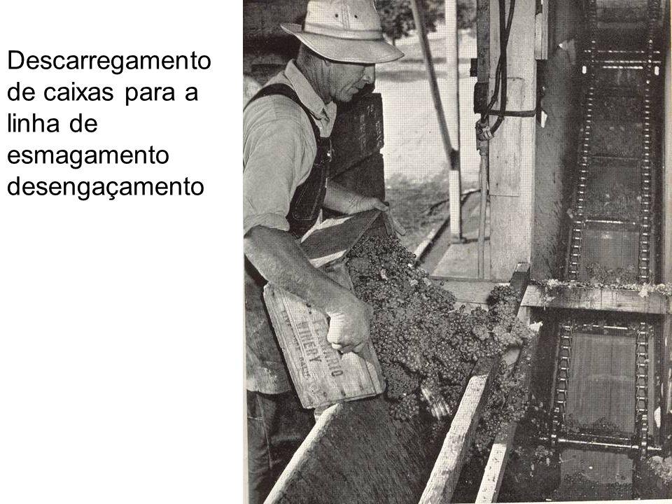 Descarregamento de caixas para a linha de esmagamento desengaçamento