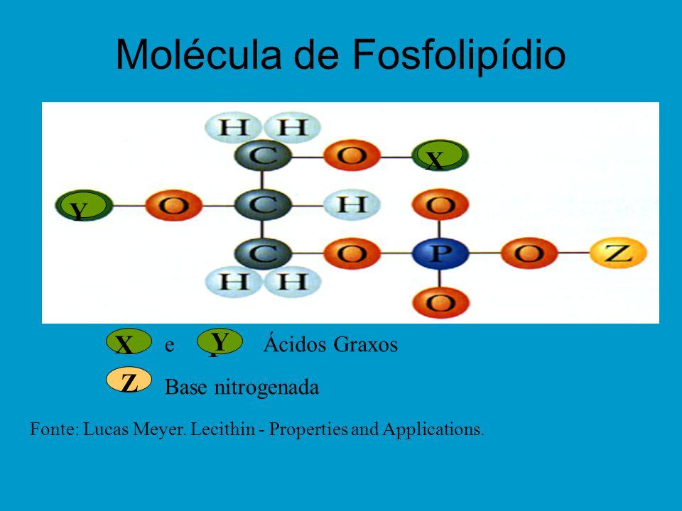 Molécula de Fosfolipídio