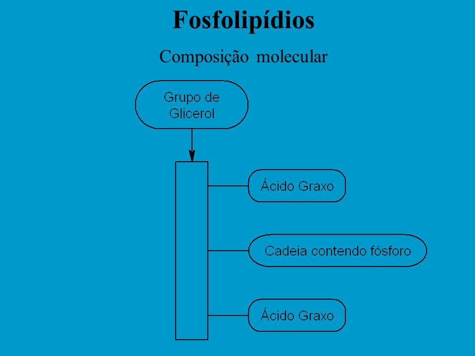 Fosfolipídios Composição molecular