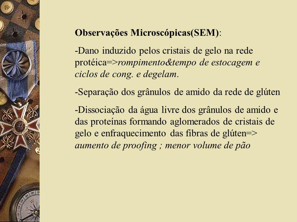 Observações Microscópicas(SEM):