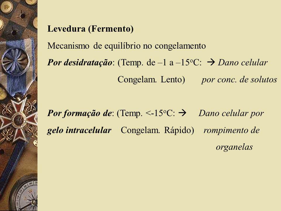 Levedura (Fermento) Mecanismo de equilíbrio no congelamento. Por desidratação: (Temp. de –1 a –15oC:  Dano celular.