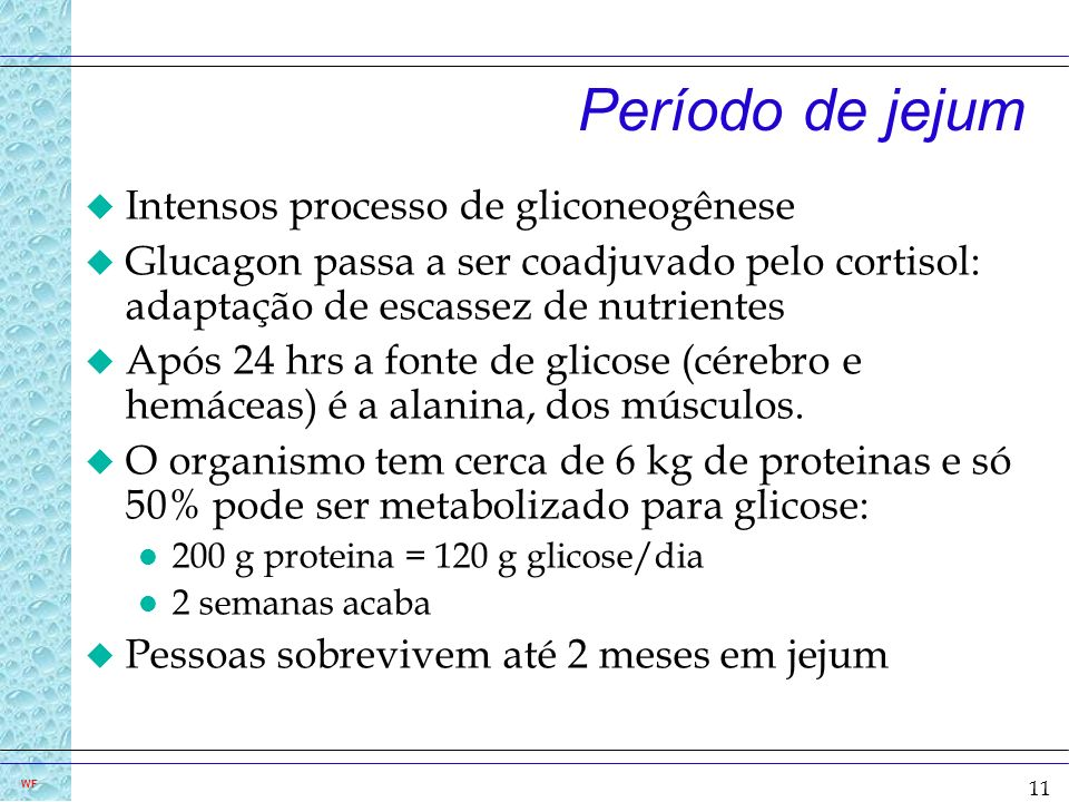 Período de jejum Intensos processo de gliconeogênese