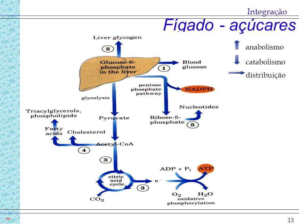 Integração Fígado - açúcares anabolismo catabolismo distribuição